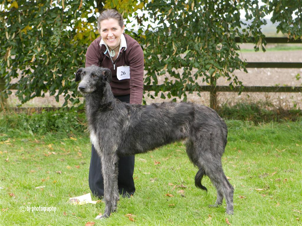 Ronnan at the Deerhound Limited Show 2010