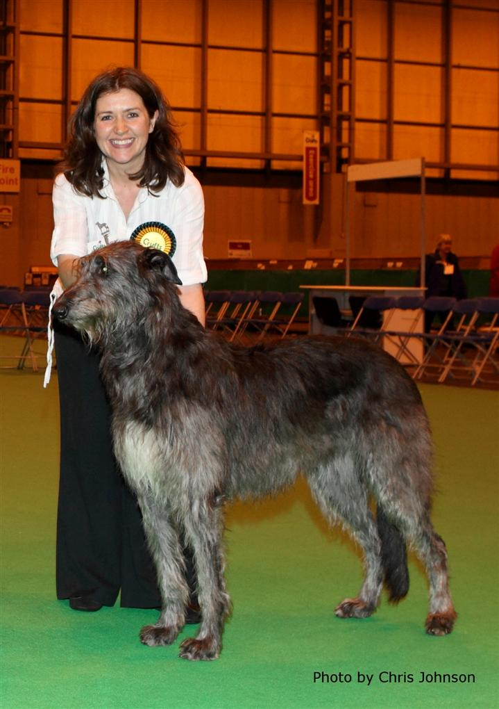 BOB Deerhound Crufts 2010