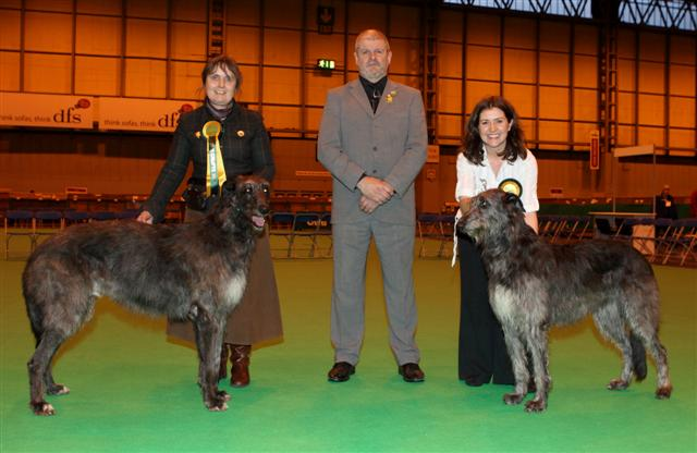 Crufts Best Of Breed Deerhound Bitch and Dog